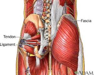 back muscle and tendon pain picture 19