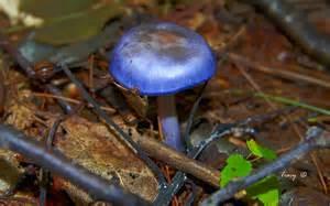 fungi mushrooms picture 7