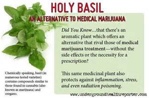 what homepathic holy herbs will treat or heal picture 3