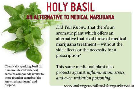 foods and herbs similar effects to marijuana picture 10