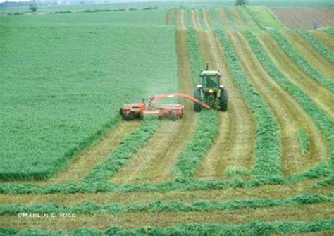 columbia basin alfalfa picture 2