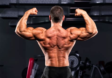 fit muscle picture 19