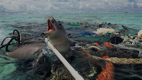 ocean debris picture 10