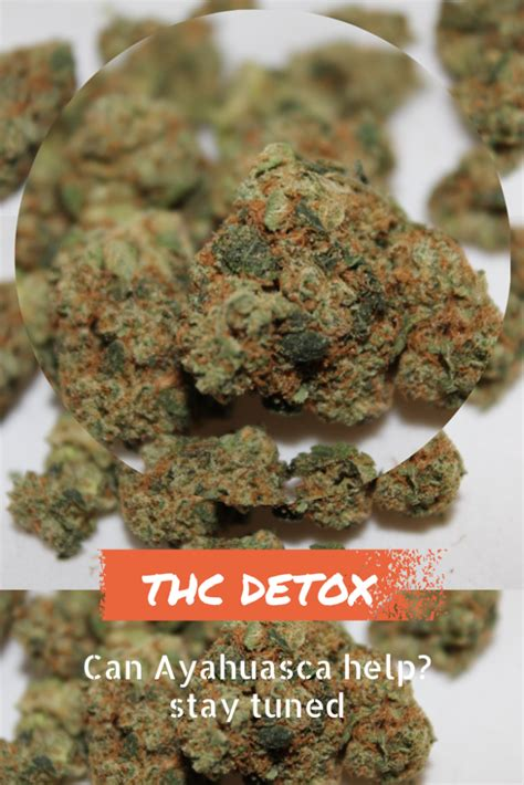 cleanse body of thc picture 5
