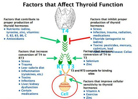 can low levels of thyroid hormone affect fetus development picture 3