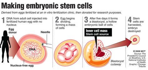 where to buy stem cell spray in uk picture 3