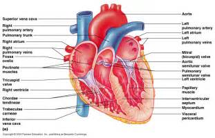 heart diagram picture 7
