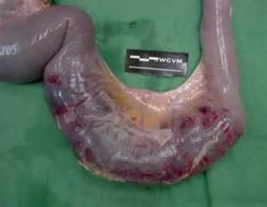 small bowel obstruction disease picture 6