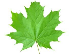 green leaf picture 10