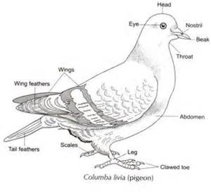 how to skin a bird picture 7