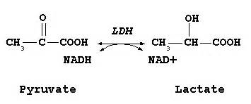 high ldh and liver detoxing picture 18