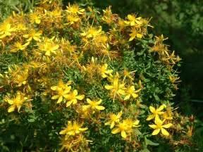 herbal medicine depression picture 6