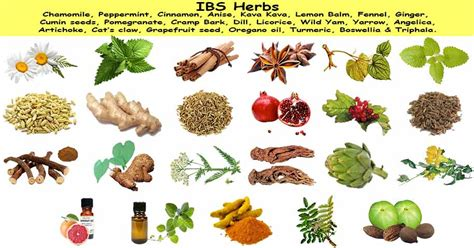 herbs that relax smooth muscle picture 5