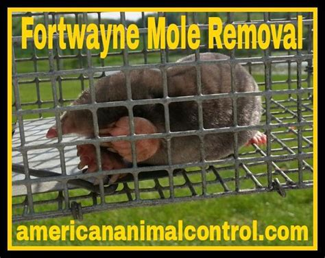 wart removal doctors in fort wayne picture 2