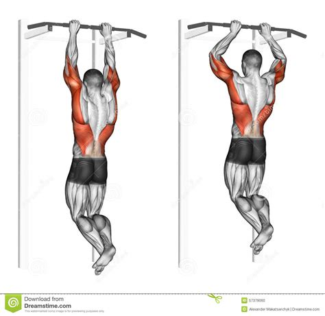 exercising muscle groups picture 9