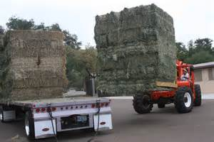 alfalfa hay for sale picture 6