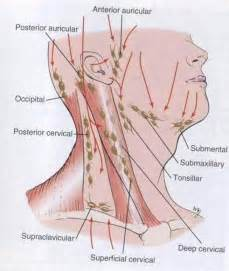 occipital lymph nodes picture 2