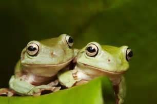 amphibian diet picture 7