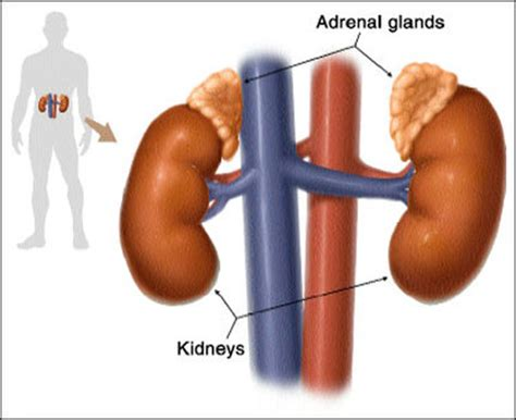 can stress cause gallbladder problems picture 2