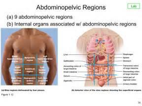 sigmoid colon picture 3
