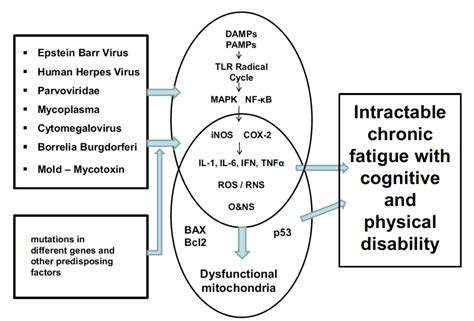are fatigue and bacterial infections related picture 1