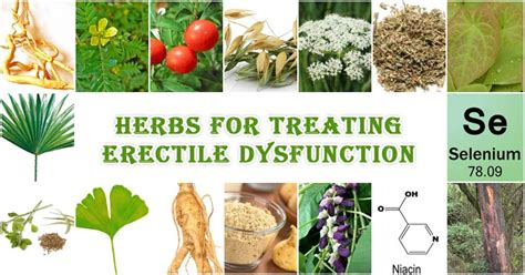 herbs to stop erection picture 6
