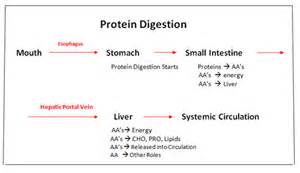 formula for digestion picture 11