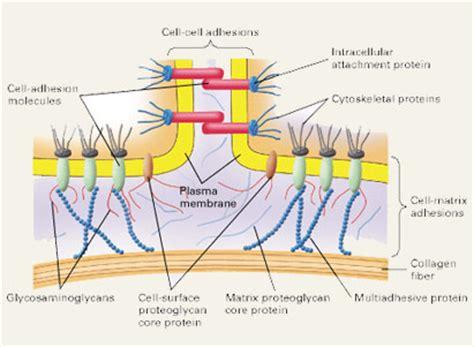 can collagen supplements raise blood sugar levels? picture 8