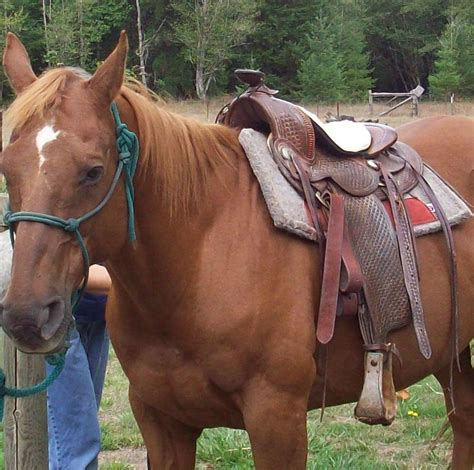 horses and cinch muscle tears picture 10