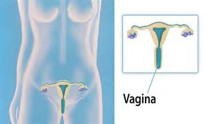 health vaginas show daily motion picture 5