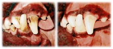 alternative dog teeth cleaning picture 14