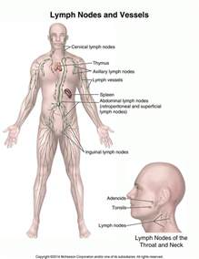 Find prostate info list all picture 11