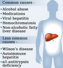 what do high liver enzymes mean picture 3