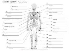 diagrams of skeletal muscle fiber picture 6