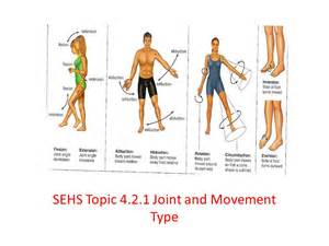 joint movements anatomy picture 14