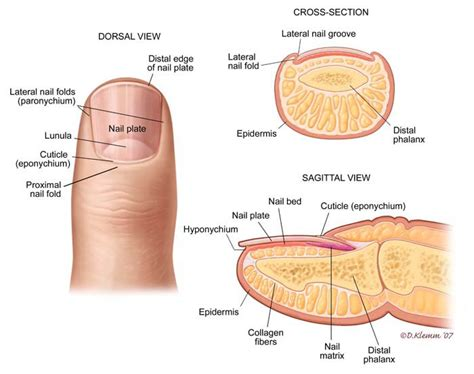 yeast infections on skin picture 6