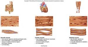 itric contraction in smooth muscle tissue picture 17