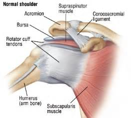 can large breast cause tendonitis in shoulder picture 17