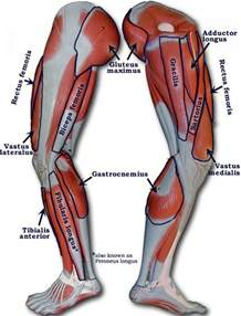 gaining inner thigh muscle picture 6