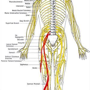 back pain loss of bladder picture 10