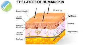 layers of skin picture 10