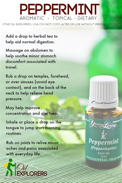libido essential oil peppermint picture 2