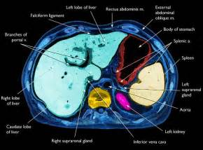 liver anatomy ct picture 1