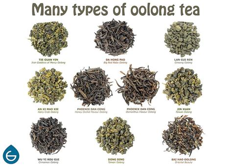 oolong and weight loss picture 13