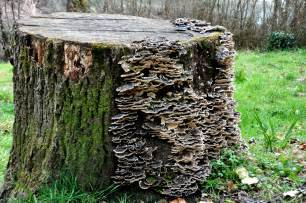 wood fungi picture 13