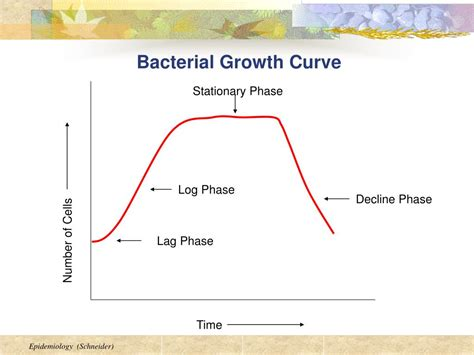bacterial growth picture 3