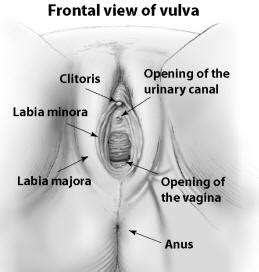 inside vagina for health picture 14