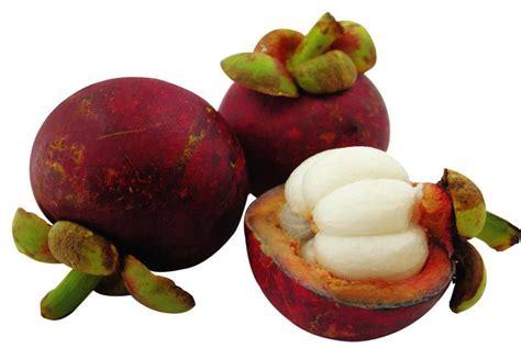 garcinia cambogia fruit picture 9