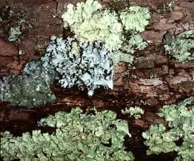 taiga fungi picture 3