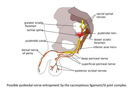 joint and nerve pain picture 3